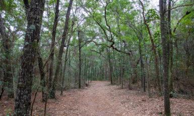 UWF nature trail